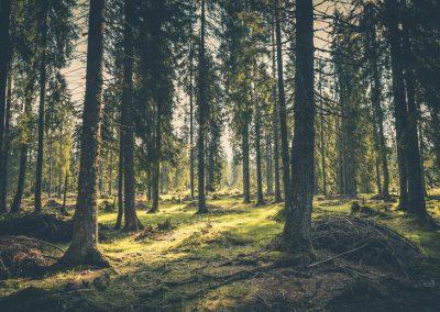 turvandring skog